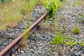 image of weed  - Different types of weeds grow and flourish between the unused rusty rails - JPG