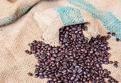 pic of coffee coffee plant  - Coffee beans in coffee bag on sack surface background - JPG