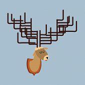 pic of deer head  - Deer head of   with large antlers - JPG