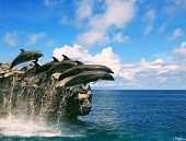 stock photo of dolphin  - flock of dolphin jumping through sea water and floating mid air against beautiful cloudy day over natural horizontal - JPG