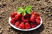 pic of strawberry plant  - juicy strawberry - JPG