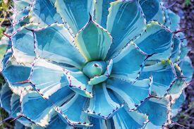 stock photo of spiky plants  - Macro of succulent plant in the desert - JPG