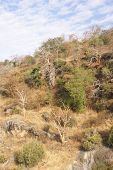 Rugged Cliffs And Scrubland Jungle
