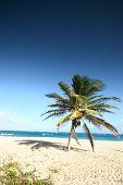 Tropical Beach 7