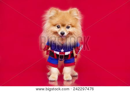 Pet Super Hero Captain America
