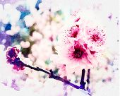 A Cherry Blossom (commonly Known In Japan As Sakura) Cherry Blossoms At The Tokyo Imperial Palace. T poster