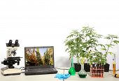 Cannabis Laboratory. Marijuana Lab with digital microscope showing extreme microscopic close up view poster