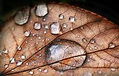 Autumnal leaf, macro shot, with dew drops