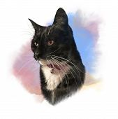 Cute Black Cat With White Breast And Mustache. Portrait Of Pet. Realistic Drawing Of A Cat On Waterc poster
