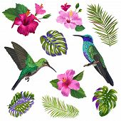 Watercolor Hummingbird, Hibiskus Flowers And Tropical Palm Leaves. Hand Drawn Exotic Colibri Birds A poster