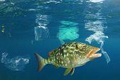 Plastic ocean. Fish among plastic bags polluting the sea. Microplastics contaminate seafood    poster