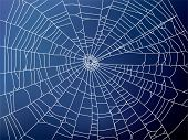 picture of spider web  - web - JPG