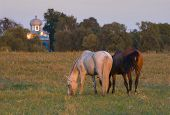 two horses on the meadow and slavonic church on the background