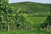 hilly vineyard, baden