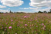 flowers field under blue cloud sky
