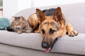 Adorable Cat And Dog Resting Together On Sofa Indoors. Animal Friendship poster