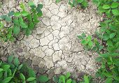 Dry Soil And Plants