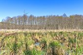 Swamp landscape with blue sky