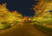 Light Up At Red Fall Foliage Tunnel, The Maple Corridor, With Illuminated Red Maple Leaves Or Fall F poster