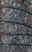 Tree Trunk Decorated With The Lights Closeup, Tree Trunk Texture, Tree Trunk Background - Image poster