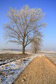 Dirty Rural Road