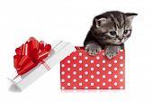 Постер, плакат: Смешные детские Кот в красный подарочной коробке