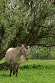 horse in beautiful landscape