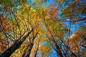 Dossel da árvore