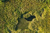 Aerial View Of Green Grass Landscape. Top View From High Attitude In Summer Evening. Small Marsh Bog poster