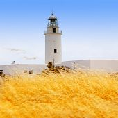 stock photo of mola  - La Mola lighthouse in formentera with golden dried grass field - JPG