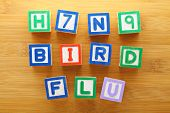 H7N9 bird flu toy block