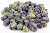 stock photo of cruciferous  - Pile of purple green brussels sprouts cruciferous vegetables on a white paper towel - JPG