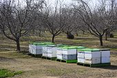 Bee Hives In Orchard