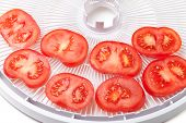 Fresh Tomato On Food Dehydrator Tray, Ready To Dry
