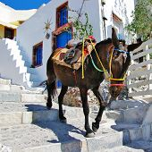 donkey on stairs of Santorini, traditional Greek life series