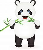 Funny panda eating bamboo
