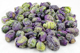pic of cruciferous  - Pile of purple green brussels sprouts cruciferous vegetables on a white paper towel - JPG
