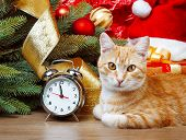 Cat Wating For Christmas Time
