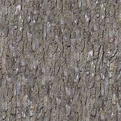 Pine Bark. Seamless Tileable Texture.