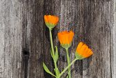 Three Calendula Marigold Flowers On Old Wooden Plank