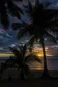 Sunset On Palm Trees