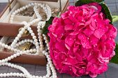 pink hortensia flowers and jawel box close up