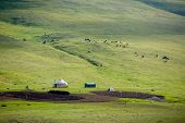 stock photo of yurt  - Yurt and livestock in Kyrgyzstan - JPG