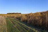 Autumn Elephant Grass