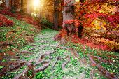 Beautiful Autumn Forest Landscape