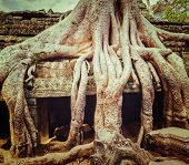 Vintage retro effect filtered hipster style travel image of ancient ruins with tree roots, Ta Prohm temple, Angkor, Cambodia