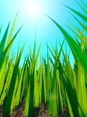Close up of fresh thick grass with sun and groun