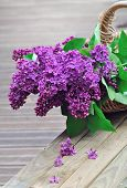 Lilac Flowers In A Wicker Basket