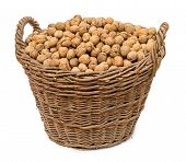 Walnuts In Big Basket Isolated