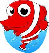 Cute Clown fish